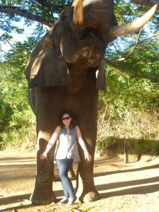 Standing between an elephants legs.... not in the least bit scary!