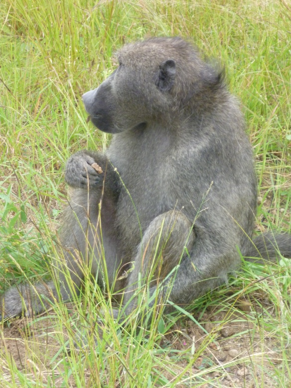 They may not be the prettiest of animals but baboons are just brilliant to watch, they are so social.