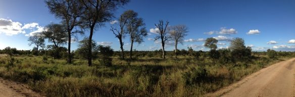 Blue skies over Kruger National Park