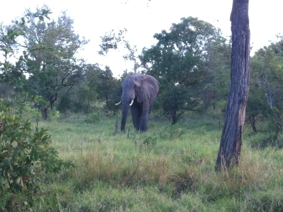 My king of the jungle, the elephant - I never get bored of seeing them in the wild