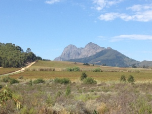 The beautiful landscape of the Winelands of the Western Cape