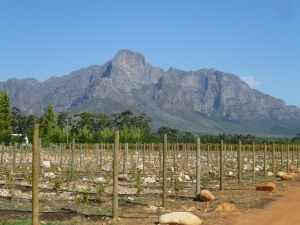 Blue skies, stunning landscape and wine tasting, this is the place for it!