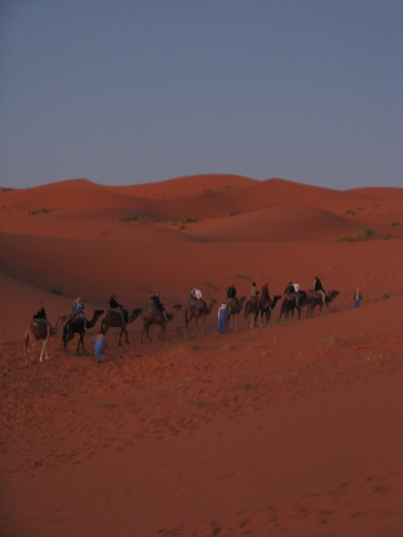 Camels, the only way to travel when travelling in the desert!